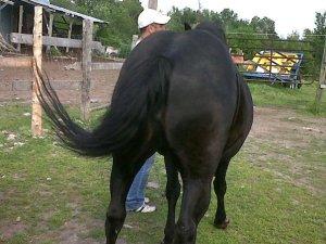 JamesGideon-Horse2